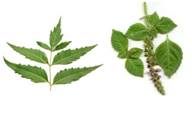 neem and tulsi face wash in monsoon skin care