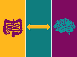 Gut Brain Connection And How Probiotics Benefits Them